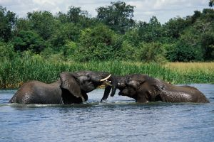 MURCHISON FALLS -3 DAYS - Group Price $350